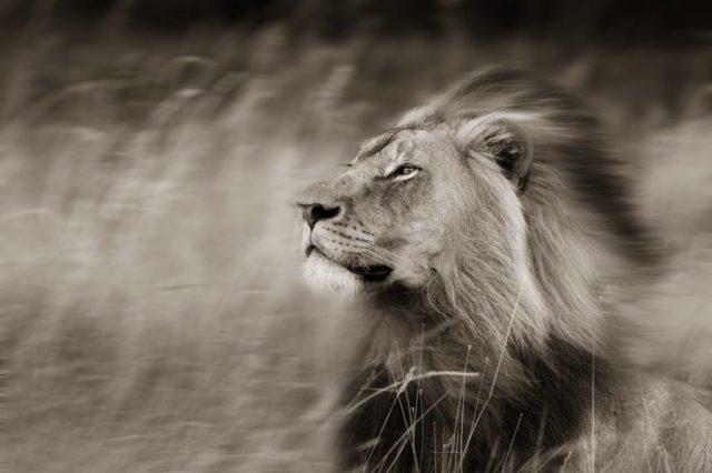 Lion of the Spirit